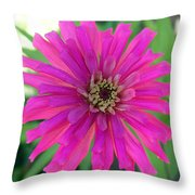 Pink Zinnia In Florida Throw Pillow