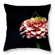 Pink Zinnia Throw Pillow