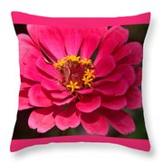 Pink Zinnia Throw Pillow