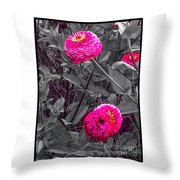 Pink Zinnias Against Grey Background Throw Pillow