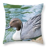 Pintail Portrait Throw Pillow