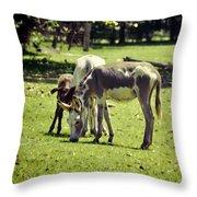 Pinto Donkey I Throw Pillow