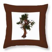 Pinus Aristata Tree Throw Pillow