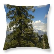 Pinus Tress  Throw Pillow
