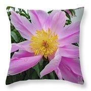 Pinwheel - Bowl Of Beauty Throw Pillow