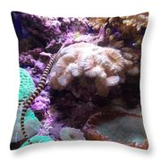 Pipe Fish And Sea Anemone  Throw Pillow