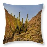 Pipe Organ Cactus At Sunrise Throw Pillow