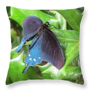 Pipevine Swallowtail Throw Pillow