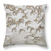Piping In Spring Throw Pillow