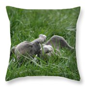 Pit Bull Puppy 4 Blue Merle Throw Pillow