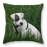 Pit Bull Puppy 5 White With Patch Throw Pillow