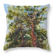 Pitch Pines, Cape Cod Throw Pillow