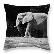 Placid Pachyderm Throw Pillow