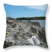 Plant And Shell On A Dominican Shore Throw Pillow