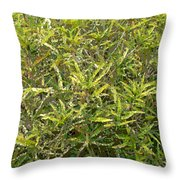 Plant Power 9 Throw Pillow by Eikoni Images