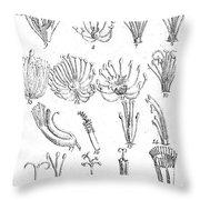 Plant Sexual Systems, Carl Linnaeus Throw Pillow