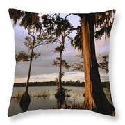 Plantation Gardens, Cypress Trees Throw Pillow