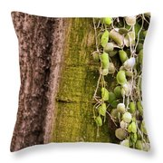 Plants And Trees Hawaii 522 Throw Pillow