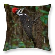 Plastic Wrapped Pileated Woodpecker Throw Pillow