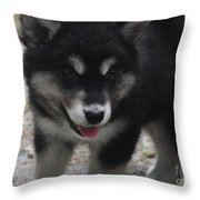 Playful Alusky Puppy Dog Ready To Pounce Throw Pillow