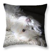 Playful Puppy Throw Pillow