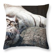 Playful Tiger Throw Pillow