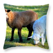Time For Play Throw Pillow