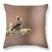 Please Stop The Rain - Brown-headed Nuthatch Throw Pillow