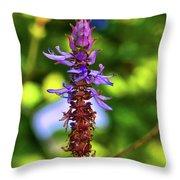 Plectranthus Caninus 002 Throw Pillow