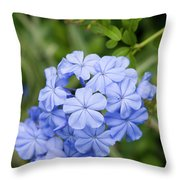 Plumbago Throw Pillow