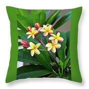 Plumeria Flowers 5 Throw Pillow