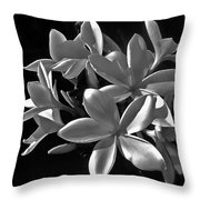 Plumeria Proper Evening Throw Pillow