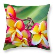 Plumeria Rainbow Throw Pillow