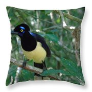 Plush-crested Jay   Cyanocorax Chrysops Throw Pillow