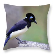 Plush Crested Jay Throw Pillow