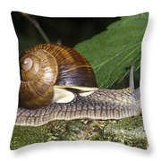 Pneumostome Of A Burgundy Snail Throw Pillow