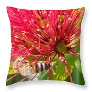 Pohutukawa Flower  Throw Pillow