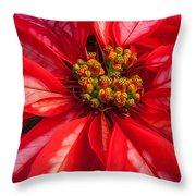 Poinsettia 845 Throw Pillow