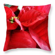 Poinsettia In Bloom Throw Pillow