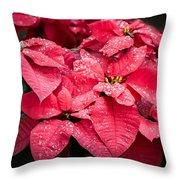 Poinsettia Morning Dew Throw Pillow