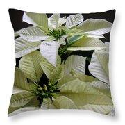 Poinsettias -  Winter White At Night Throw Pillow