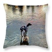 Pointer Dog Throw Pillow