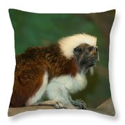 Poised To Jump Throw Pillow