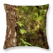 Poison Ivy Climbing Oak Tree Trunk Throw Pillow