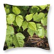 Poison Oak Vine - Toxicodendron Throw Pillow