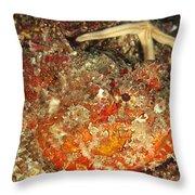 Poisonous Stone Fish, Scorpaena Mystes Throw Pillow