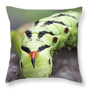 Pokemon In Real Caterpie Throw Pillow