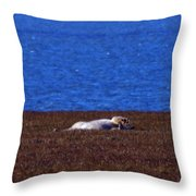 Polar Bear Rolling In Tundra Grass Throw Pillow