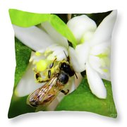 Pollen - Covered - Bee Throw Pillow