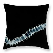 Polychaete Worm Throw Pillow